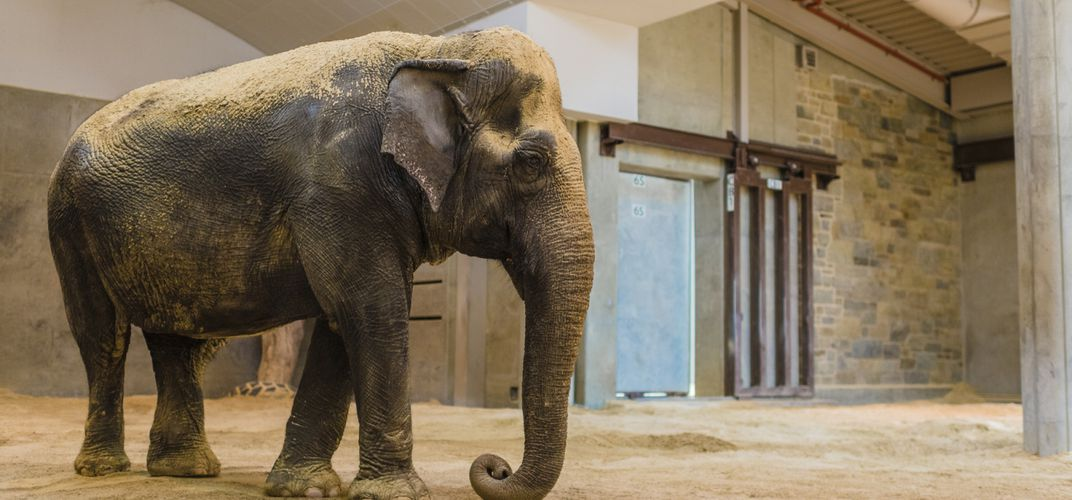 Caption: National Zoo Mourns Death of Asian Elephant