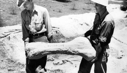 New Analysis of Depression-Era Fossil Hunt Shows Texas Coast Was Once a 'Serengeti'
