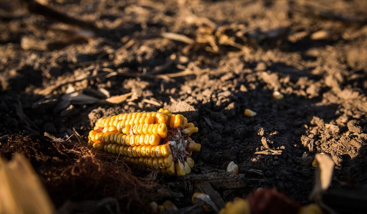 The Corn Belt Has Lost a Third of Its Topsoil