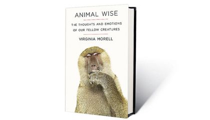 Animal Wise: The Thoughts and Emotions of Our Fellow Creatures