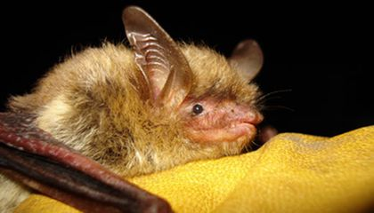 Image: This is how bats can land upside down