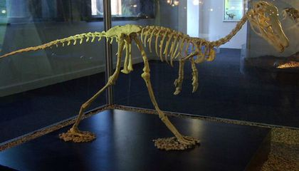 Cretaceous Legs Give Away New Dinosaur