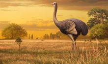 Femur of Ancient Ostrich-Like Bird Found in Europe