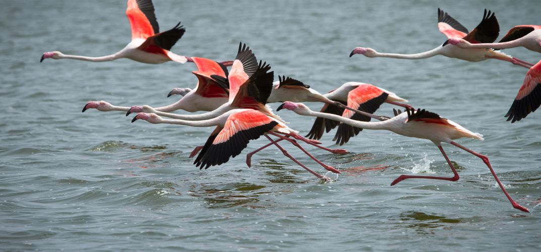 Flamingoes at Walwis Bay, Namibia