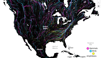 Mesmerizing Animation Shows Potential Animal Escape Routes in a Warming World