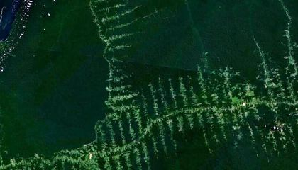Smithsonian Scientists Unearth Problems with Biofuel Crops