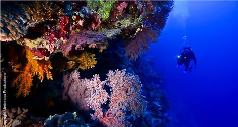Osprey Reef, one of five reefs that will have have full national park-level protection in Australia.