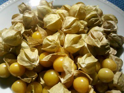 20110520090148ground-cherries-400x298.jpg