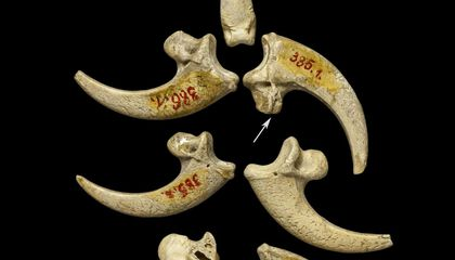 Neanderthal Jewelry Is Just as Fiercely Cool as You'd Imagine