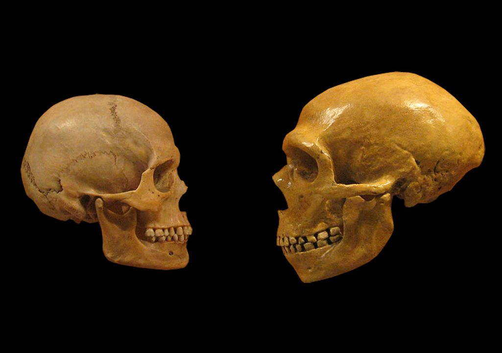 Ancient Teeth With Neanderthal Features Reveal New Chapters of Human Evolution