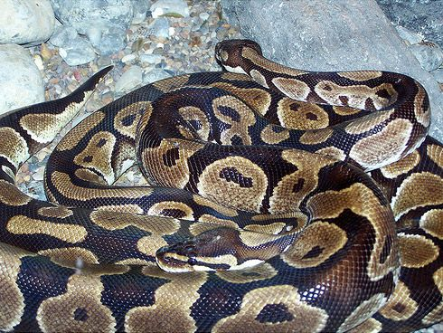 Five Giant Snakes We Should Worry About | Science | Smithsonian