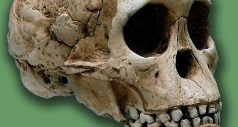 How Africa Became the Cradle of Humankind | Science