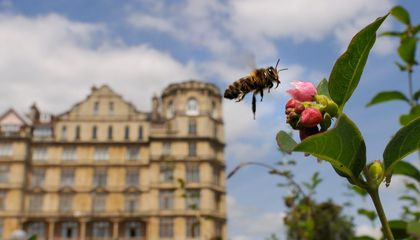 City Bees Are Actually More Diverse Than Country Bees