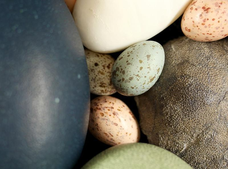 dinosaur_egg_with_bird_eggs.jpg