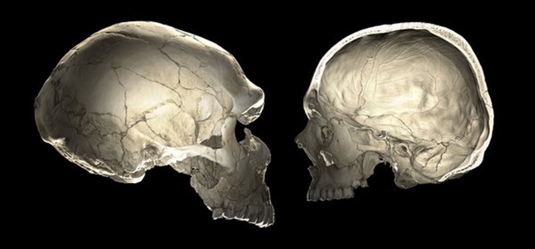 Caption: Neanderthal Genes Affect Skull Shape, Brain Size