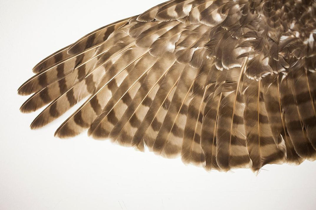 pictures of different bird feathers