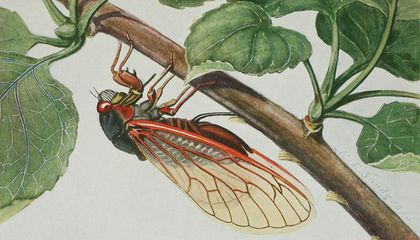 From Insects, their way and means of living. Artwork by R. E. Snodgrass