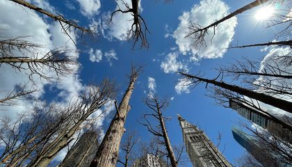 Haunting 'Ghost Forest' Resurrected in New York City