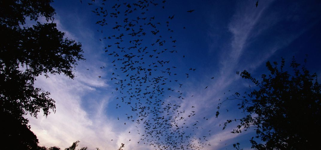 Caption: The Best Places Around the World to See Bats (by the Millions)