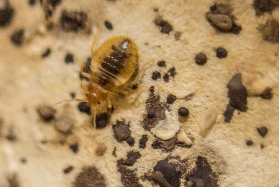 Bed Bugs History Channel