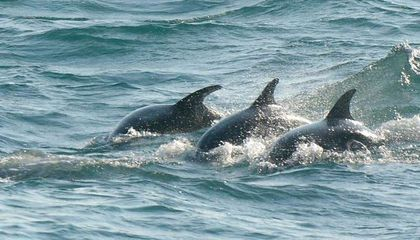 England Has Its Own Pod of Dolphins
