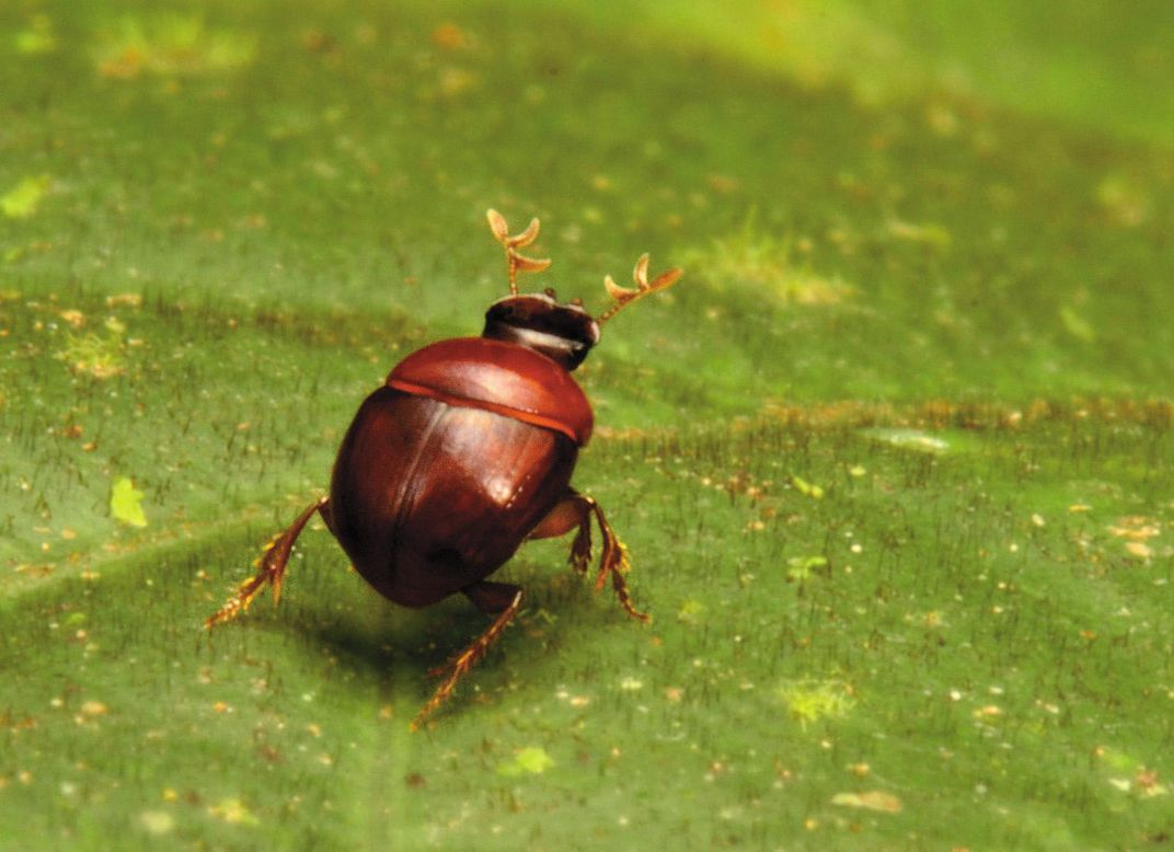 beetles no one has ever seen before