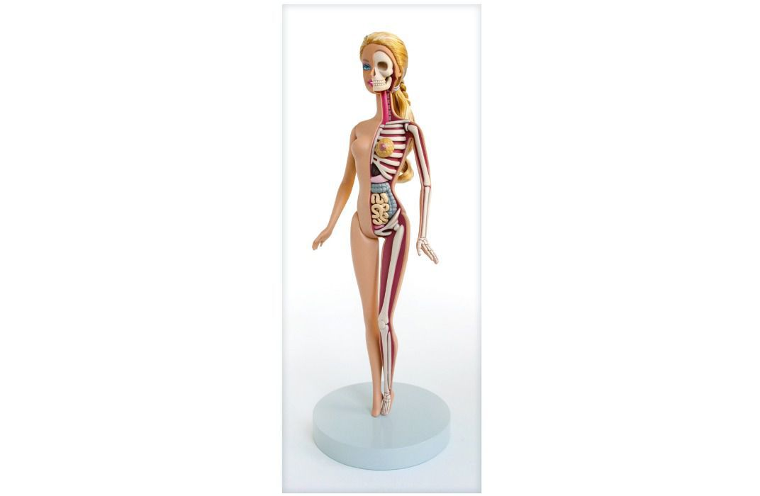 See The Inner Anatomy Of Barbie Mario And Mickey Mousebones Guts