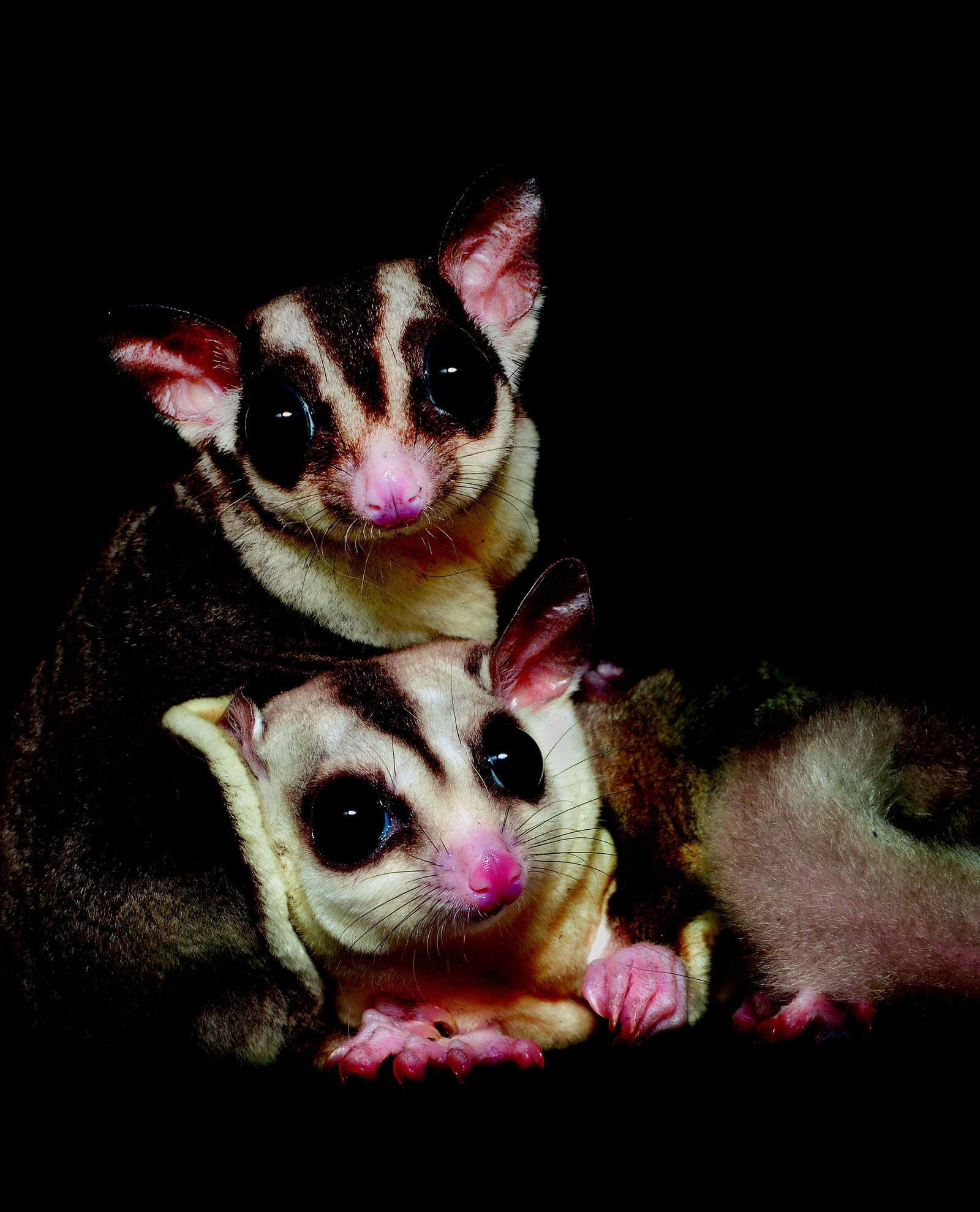 Adorable Portraits Put Nocturnal Animals in the Spotlight | Science