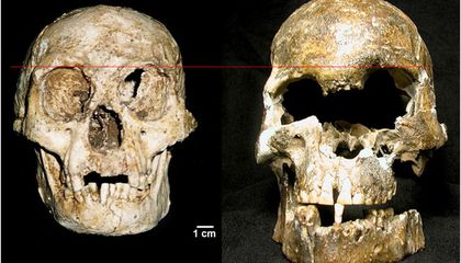 """The Flores """"Hobbit"""" Might Not Be a New Species at All"""
