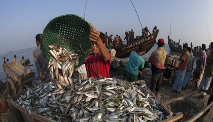 Overfishing Has Been Even Worse Than We Thought