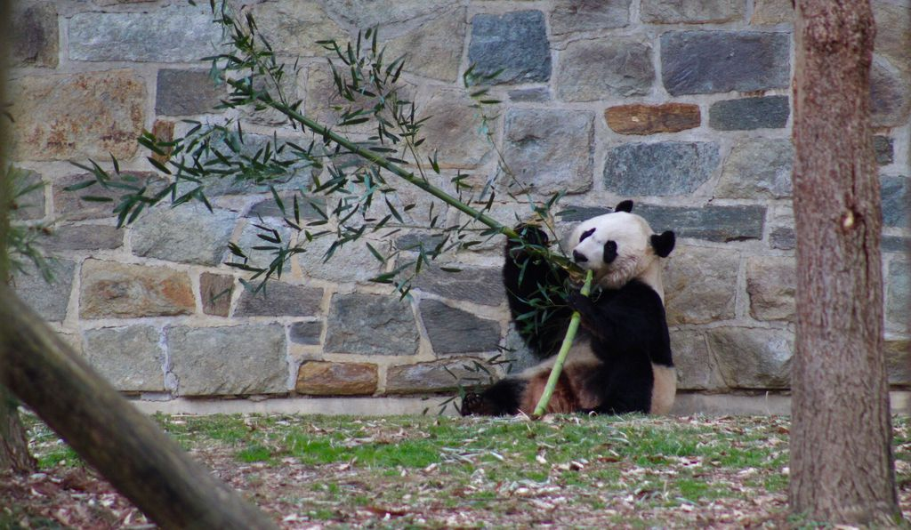 The 3-year-old Bei Bei was cared for throughout the shutdown by Zoo staffers, who went unpaid until the government reopened.