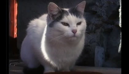 The Original Cat Video Returns to Times Square
