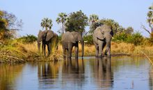Southern African Adventure