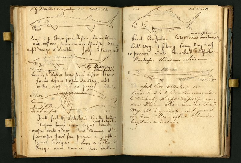 Pages from Rafinesque's journal