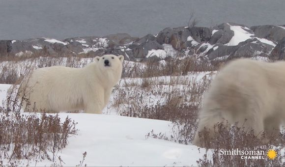 Preview thumbnail for video'The Risky Way a Polar Bear Attack Victim Confronts Her Fear