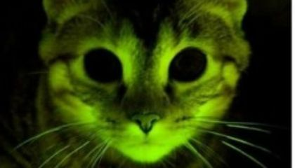 The Glow-In-The-Dark Kitty