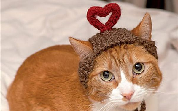 Real life cats in hats