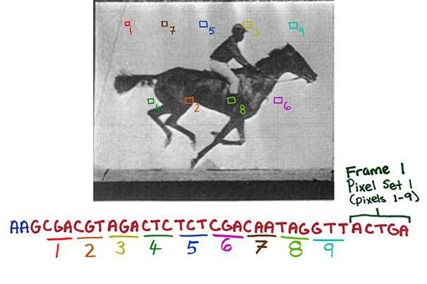 Scientists Store Video Clip in DNA of Living Cells