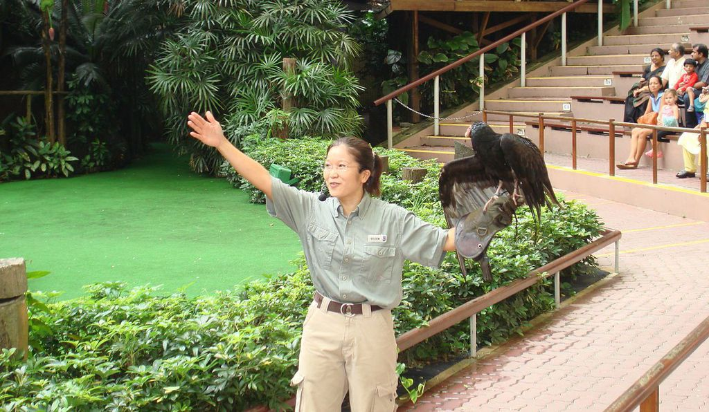 A falconry demonstration at Jurong Bird Park in Singapore.