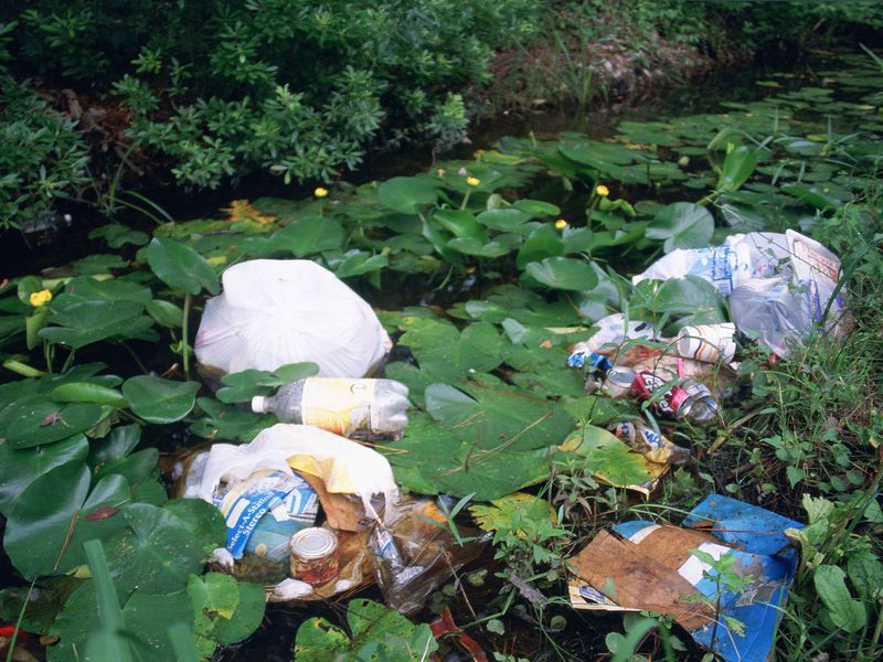 Litter and garbage dumped in wetland area among water lilies and marsh plants