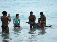 Tourists inadvertently torture a dolphin.