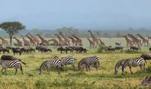 Tanzania's Great Migration description