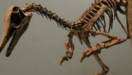 Did Dinosaurs Eat Ants?