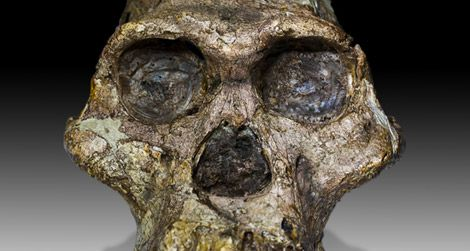 You don't have to go to South Africa to see Mrs. Ples, an Australopithecus africanus fossil.