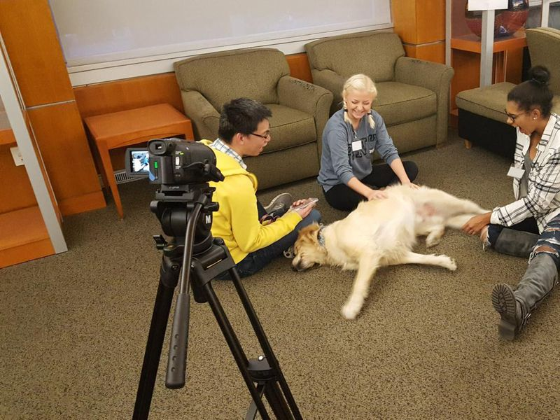 A photo of three adults sitting around a yellow labrador retreiver. The adults are petting and interacting with the dog while it lays on its side. Towards the left of the photo there is a camera recording the interaction.