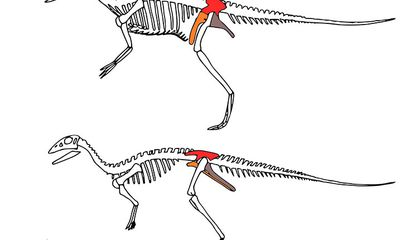 New Study Restructures the Dinosaur Family Tree