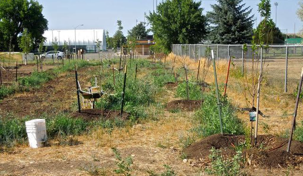 The beginnings of Thorne Rider Park's food forest in Sheridan, Wyoming. It takes years for a food forest to fully mature.