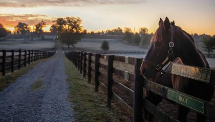 At a Kentucky Farm, Champion Thoroughbreds Live Out Their Retirements