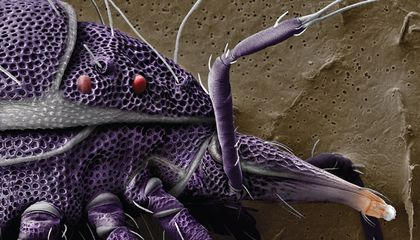 Enjoy Face Time with Seven of Earth's 3 to 5 Million Mite Species