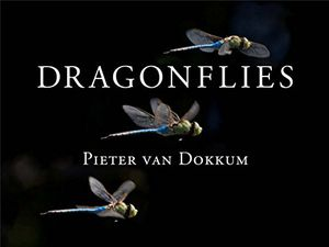 Preview thumbnail for video 'Dragonflies: Magnificent Creatures of Water, Air, and Land